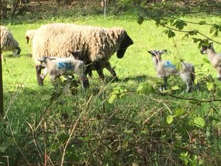 """Lambing Sunday"""